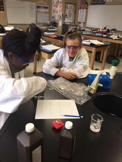 Students investigate enzymatic reaction rates.